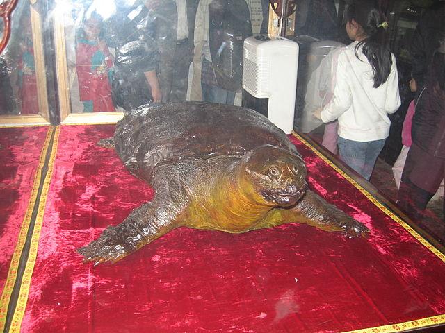 하노이 거북이